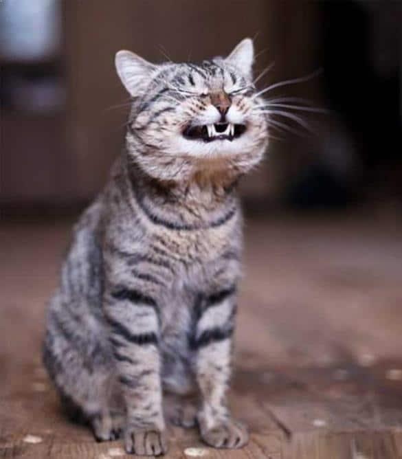 kucing senyum