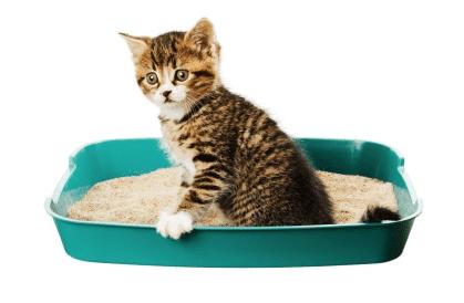 Cara Mengobati Kucing Diare
