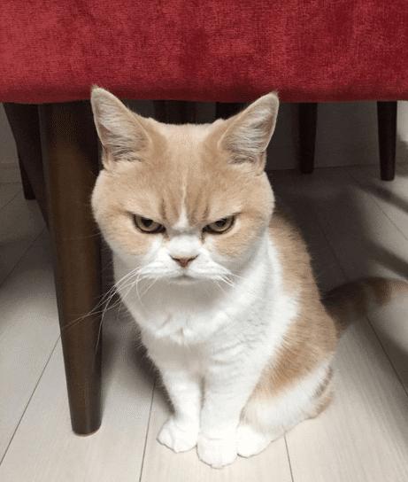 Cara Menjinakkan Kucing Galak