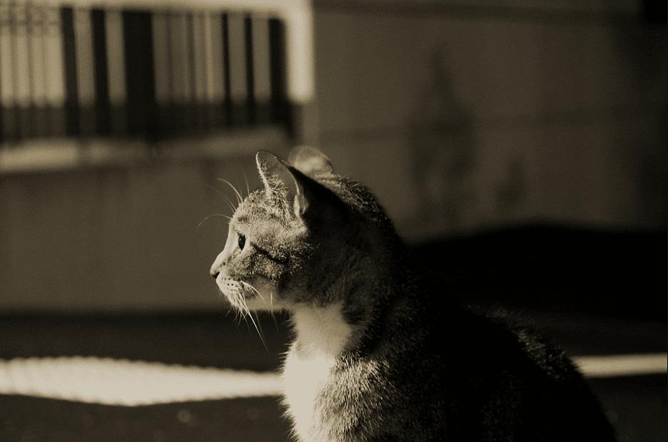 Kucing Mengeong Tengah Malam