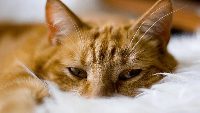 Penyebab Kucing Tidak Mau makan dan Tidur Terus