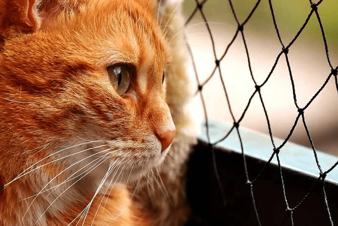 Tanda Kucing Stres
