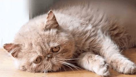 kucing sedang stres