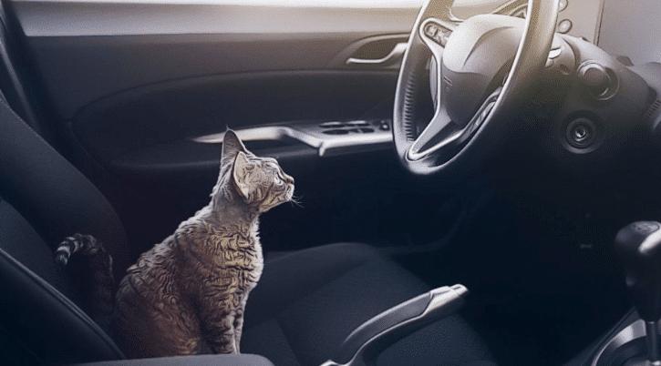 Cara Mengatasi Kucing Stres Karena Perjalanan