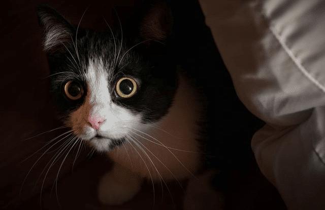 Cara Mengatasi Kucing Stres Karena Pindah Pemilik