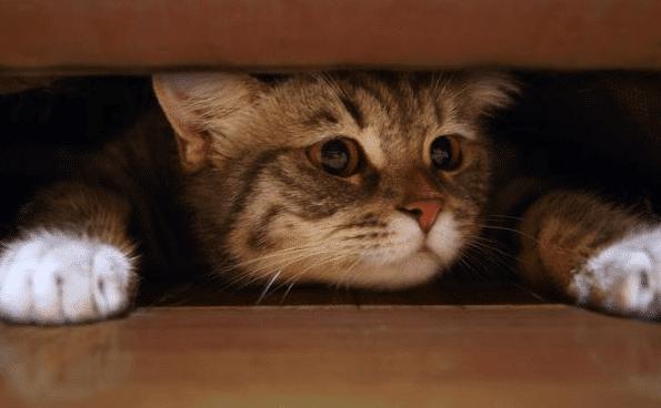 Cara Mengatasi Kucing Stres Ketakutan