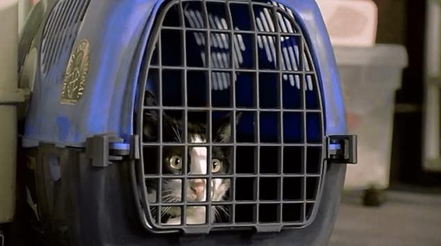 Kucing Mengeong keras di dalam Kandang