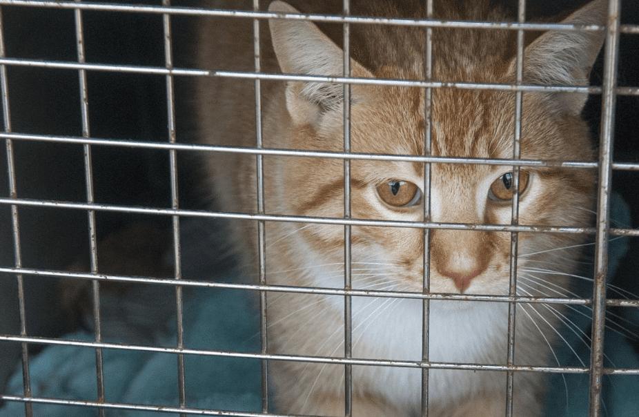 Kucing mengeong di Kandang