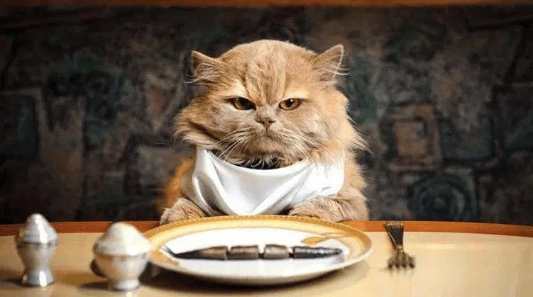 Makanan yang Berbahaya Bagi Kucing Anggora