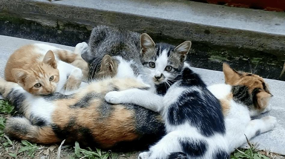 Penyebab Kucing Makan Anaknya Ternyata Ada 8 Penyebabnya