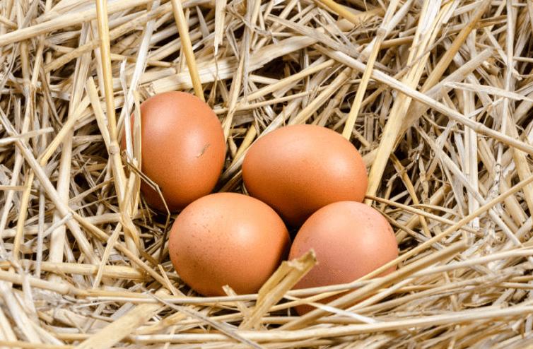 Cara Membuat Makanan Kucing dari Telur