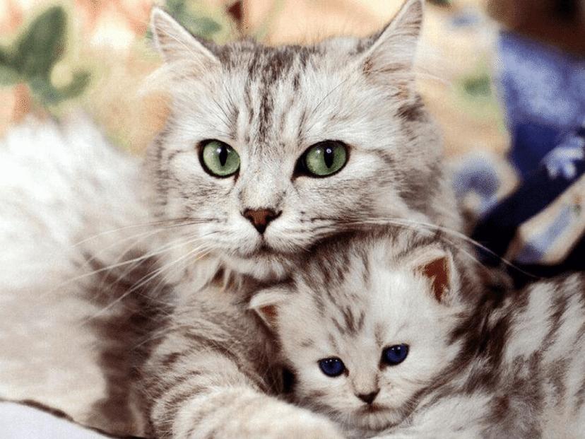 Kucing Tidak Mau Makan Setelah Melahirkan