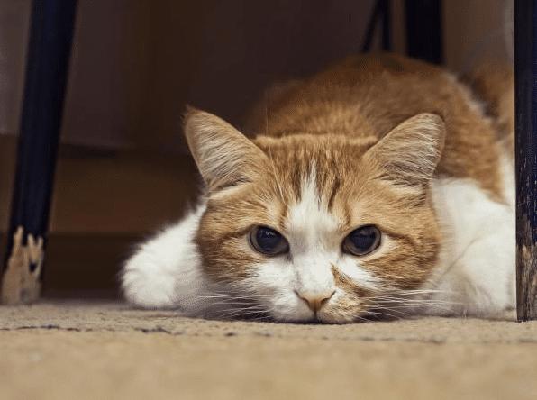 Merawat Kucing Setelah melahirkan