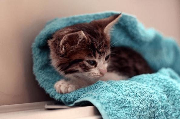 Cara Memandikan Kucing Kecil