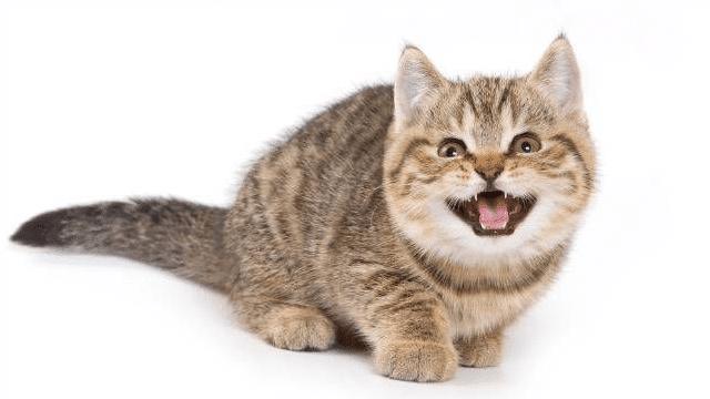 Firasat Kucing Mengeong Terus