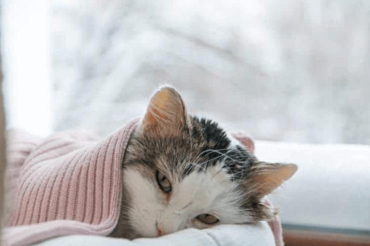 Kucing Tidak Mau Makan dan Mencret