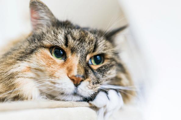Sakit Mata Kucing
