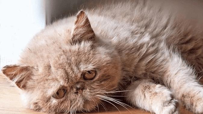 Kucing Jamuran Parah