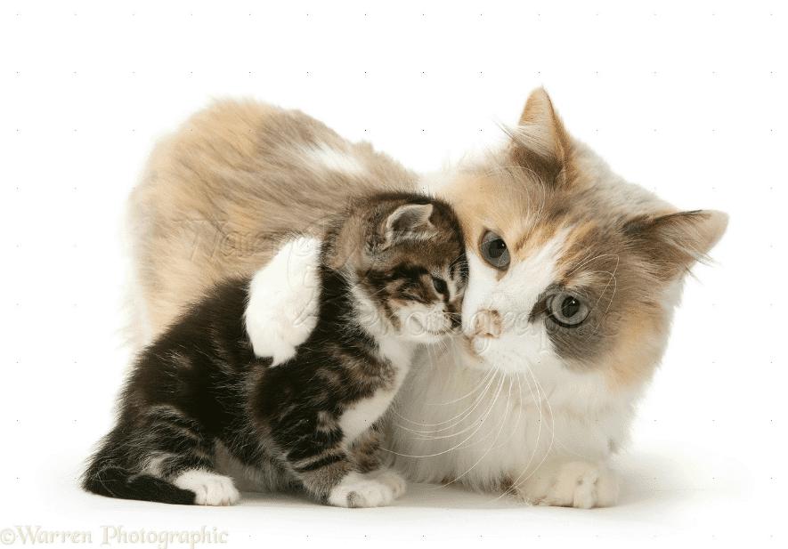 Kucing Makan Anaknya