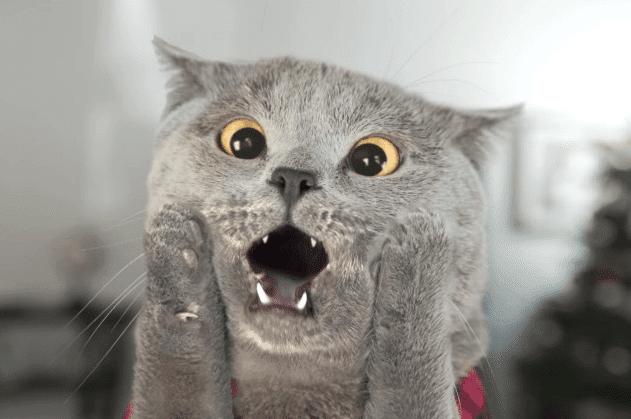 Kucing Teraneh